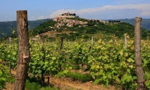 Vineyards-In-Istria